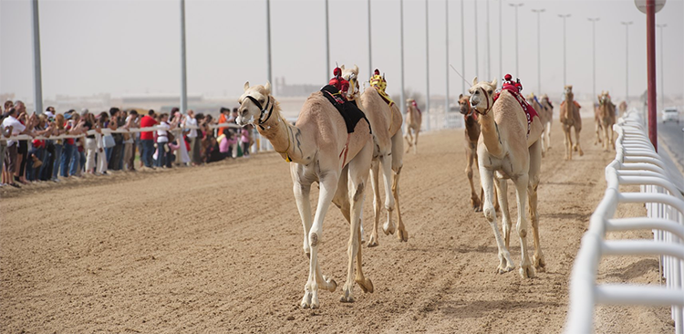 Al Shahaniya Camel Racetrack